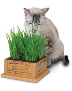 Smart Cat Kittys Garden Cat 1X1PC